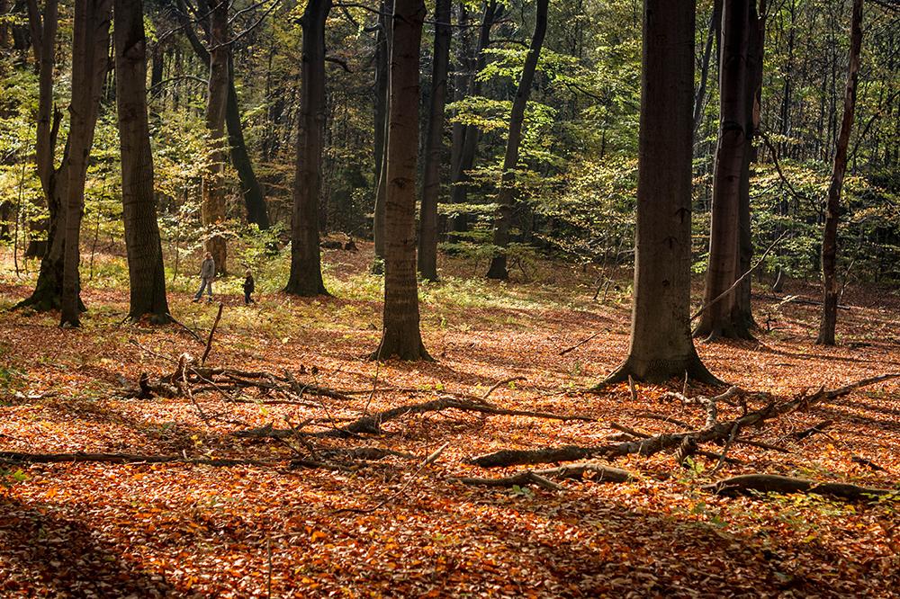Bytom las Rezerwat Buków Segiet